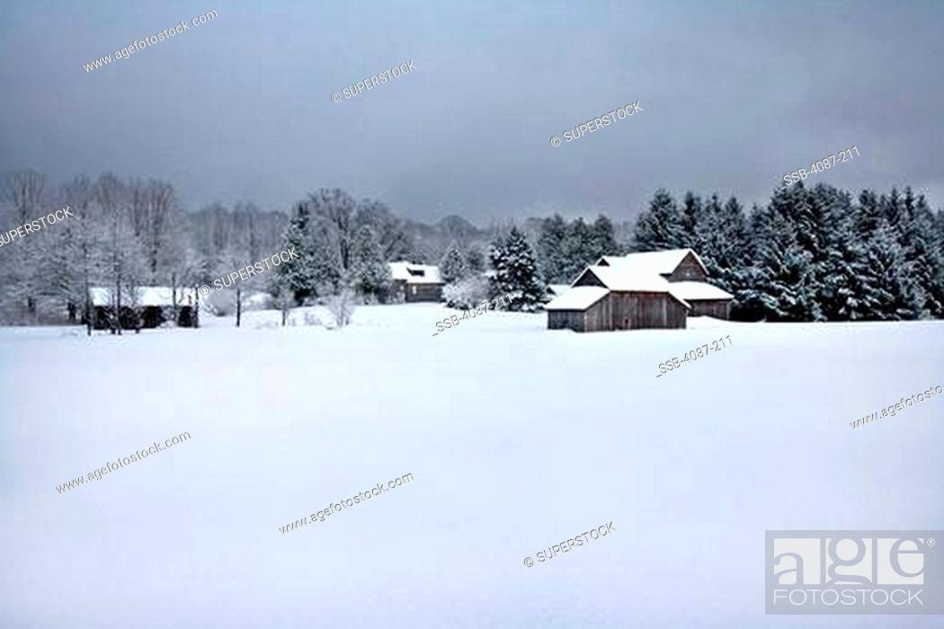 Stock Photo: Farmhouses in a snow covered field, Michigan, USA.