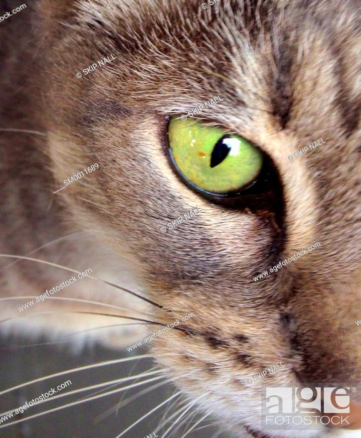Stock Photo: Closeup of a cat's green eye.