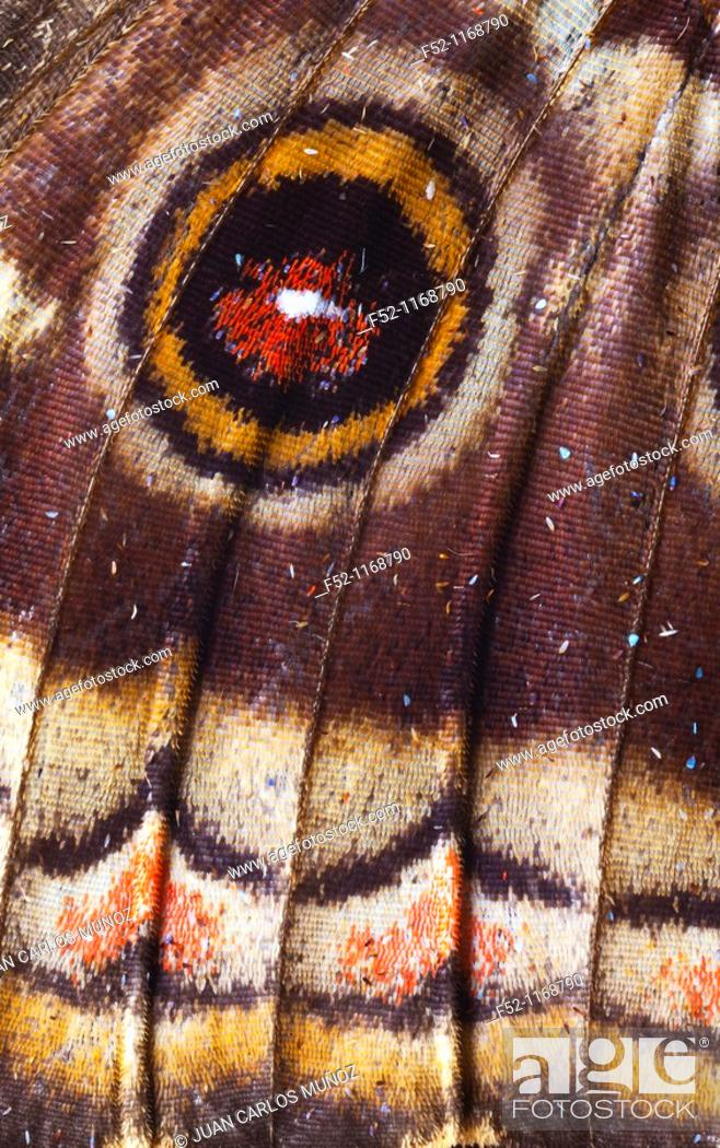 Stock Photo: Butterfly, detail of wing with an eyespot.