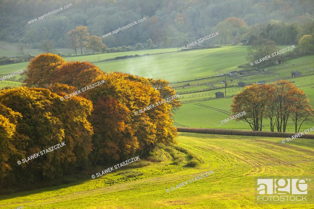Imagen: Autumn afternoon in South Downs National Park near Worthing, West Sussex, England.
