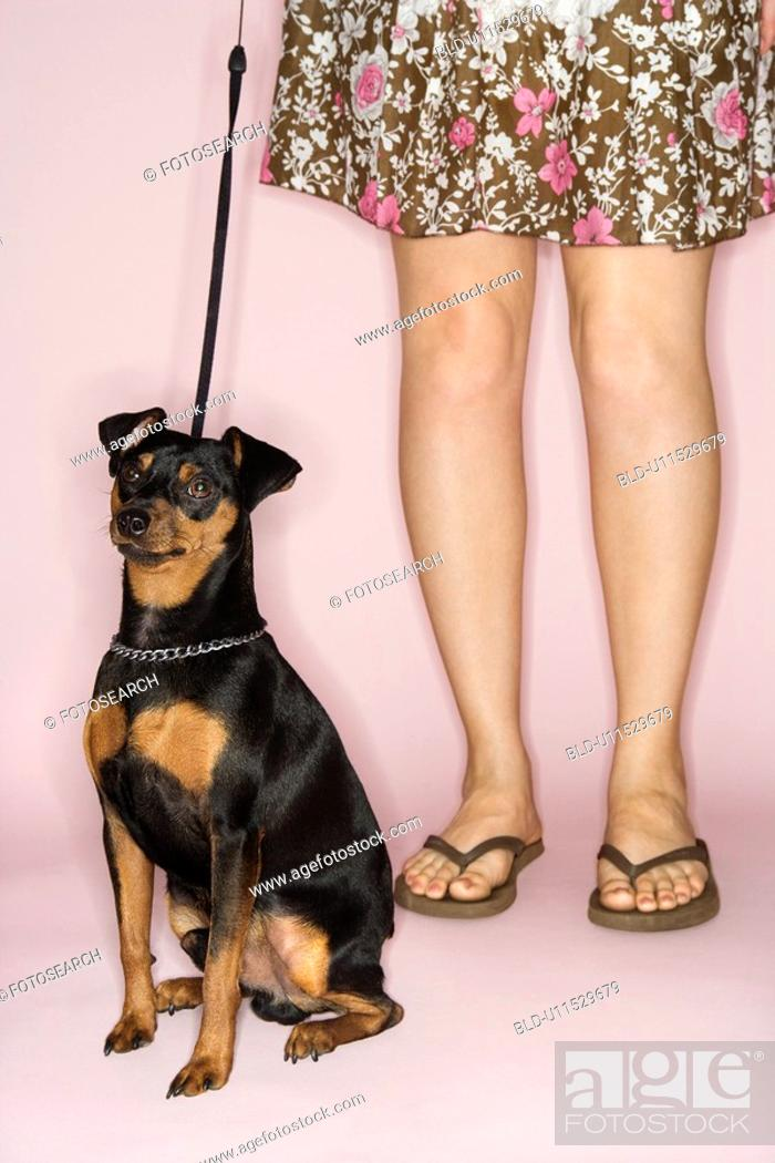 Stock Photo: Caucasian woman legs with Miniature Pinscher dog on leash against pink background.