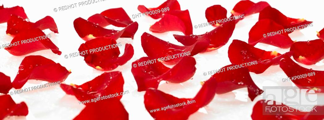 Stock Photo: Red Rose Petals with dew on them.