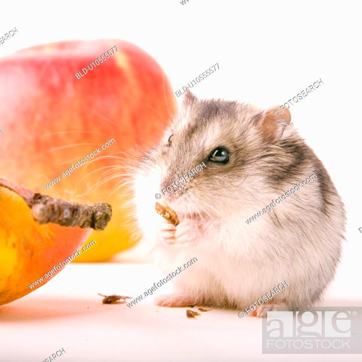 Stock Photo: cankerous, animal, apples, apple, animals, alfred.