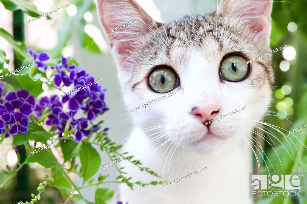 Stock Photo: Close up on lovely small kitten with plants background. Canosa DP, Italy.