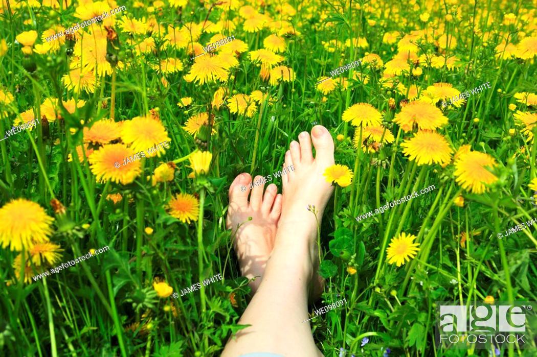 Stock Photo: feet in field of dandelions, Switzerland.