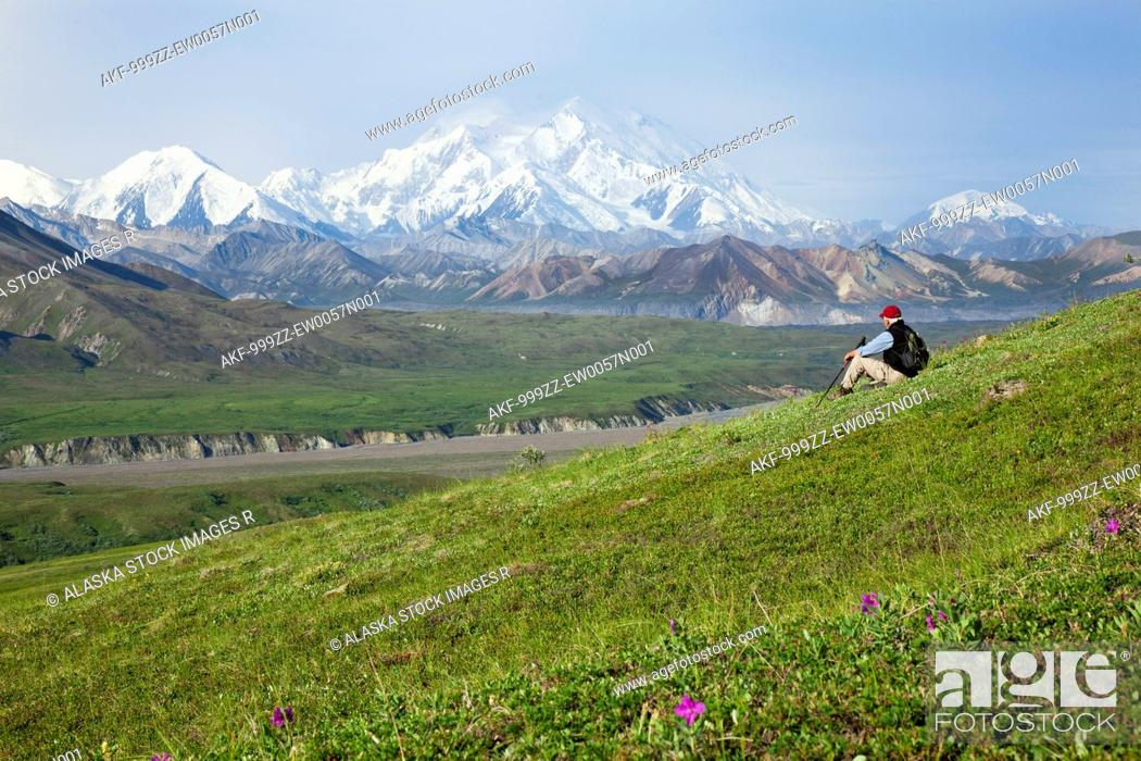 Stock Photo: Senior man hiking on the tundra in Thorofare Pass with Mt. McKinley in the background, Interior Alaska, Summer.