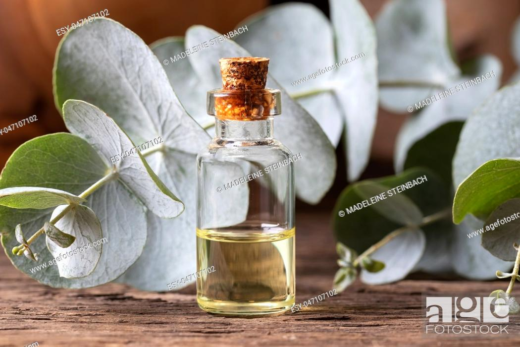 Stock Photo: A bottle of essential oil with fresh eucalyptus twigs.