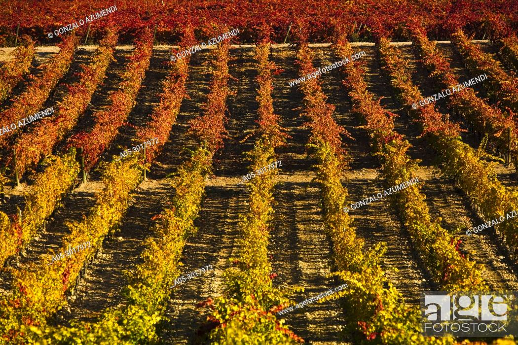 Stock Photo: Landscapes and Vineyards in autum next to Briones. La Rioja . Spain.