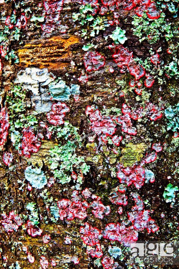 Stock Photo: Lichen encrusted Tree, James E Greu Preserve, New Port Richey, Florida.