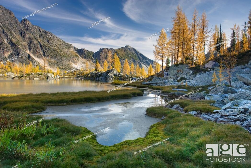 Stock Photo: Alpine larches Larix lyallii and tarn in Monica Meadows, Purcell Mountains British Columbia.