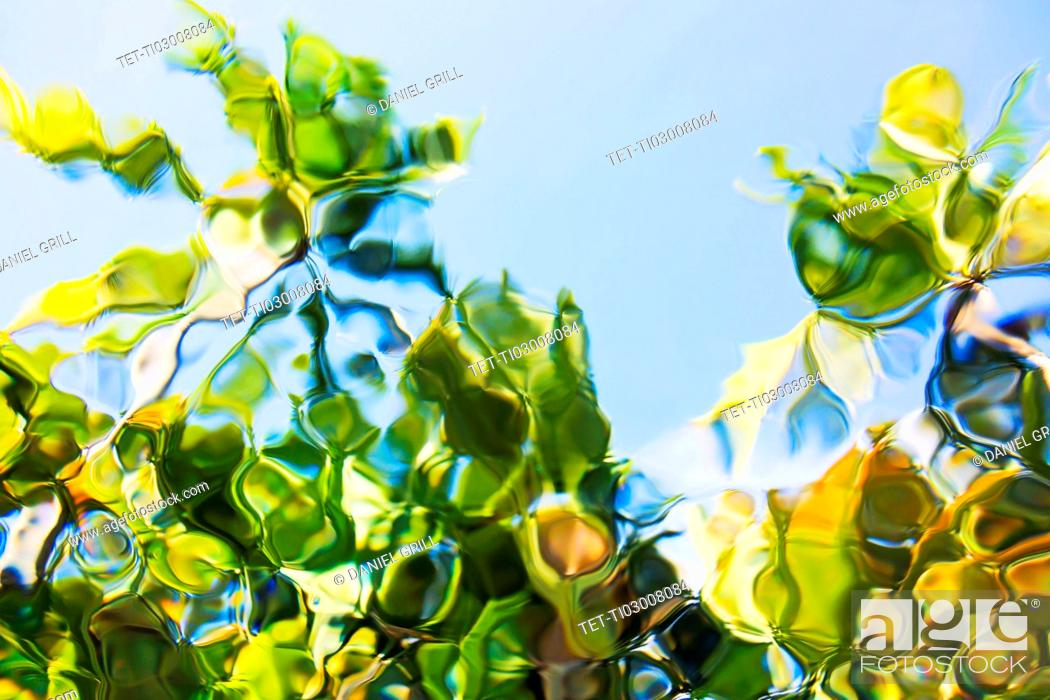 Stock Photo: Underwater view of palm trees against clear sky.
