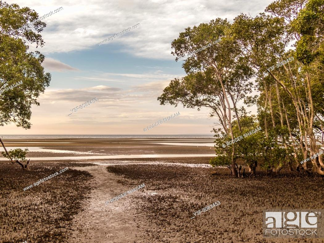 Stock Photo: Low tide at mangrove swamps in Nudgee, Brisbane, Australia.
