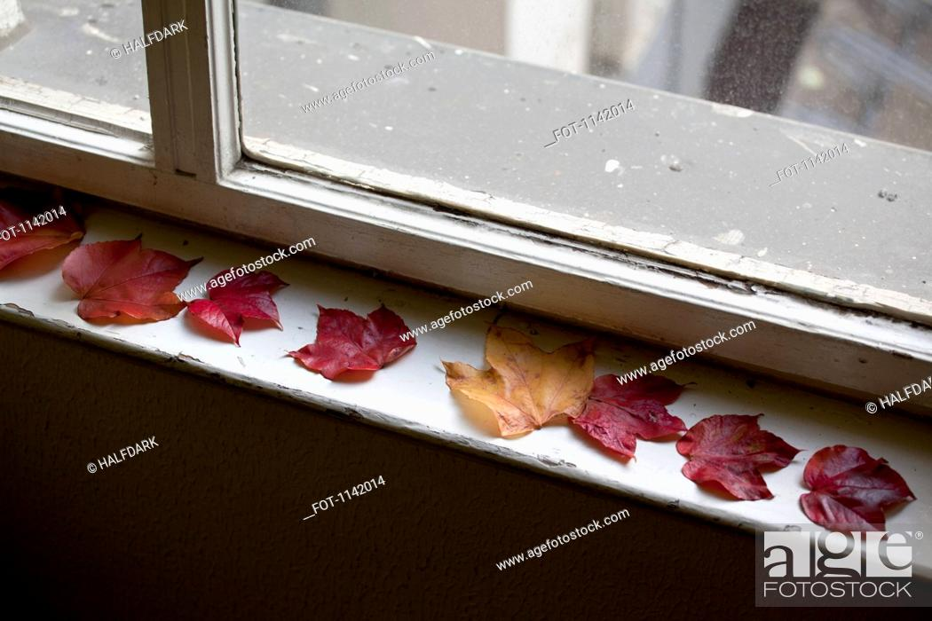 Stock Photo: Detail of autumn leaves on a window sill.