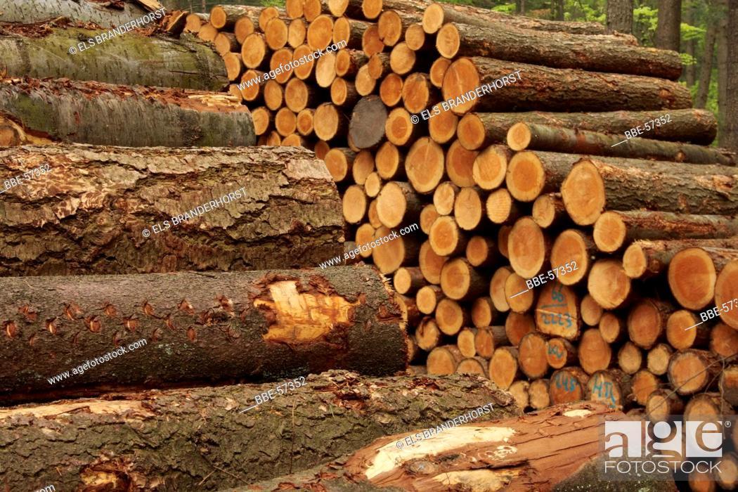 Stock Photo: Piles of timber.