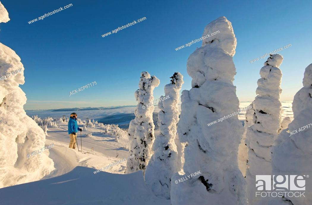 Imagen: A skier among snow ghosts chooses his route in a beautiful environment at sunrise at the top of Sun Peaks Resort, Thompson Okangan region, British Columbia.