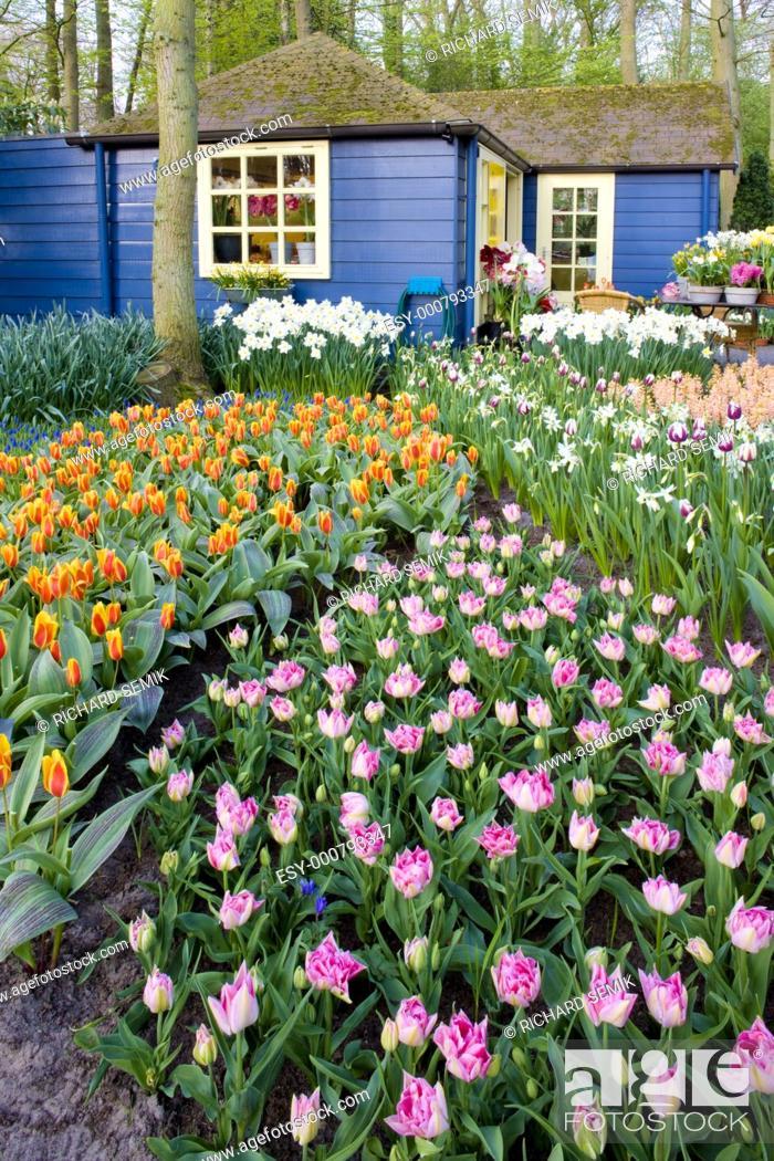 Stock Photo: Keukenhof Gardens, Lisse, Netherlands.