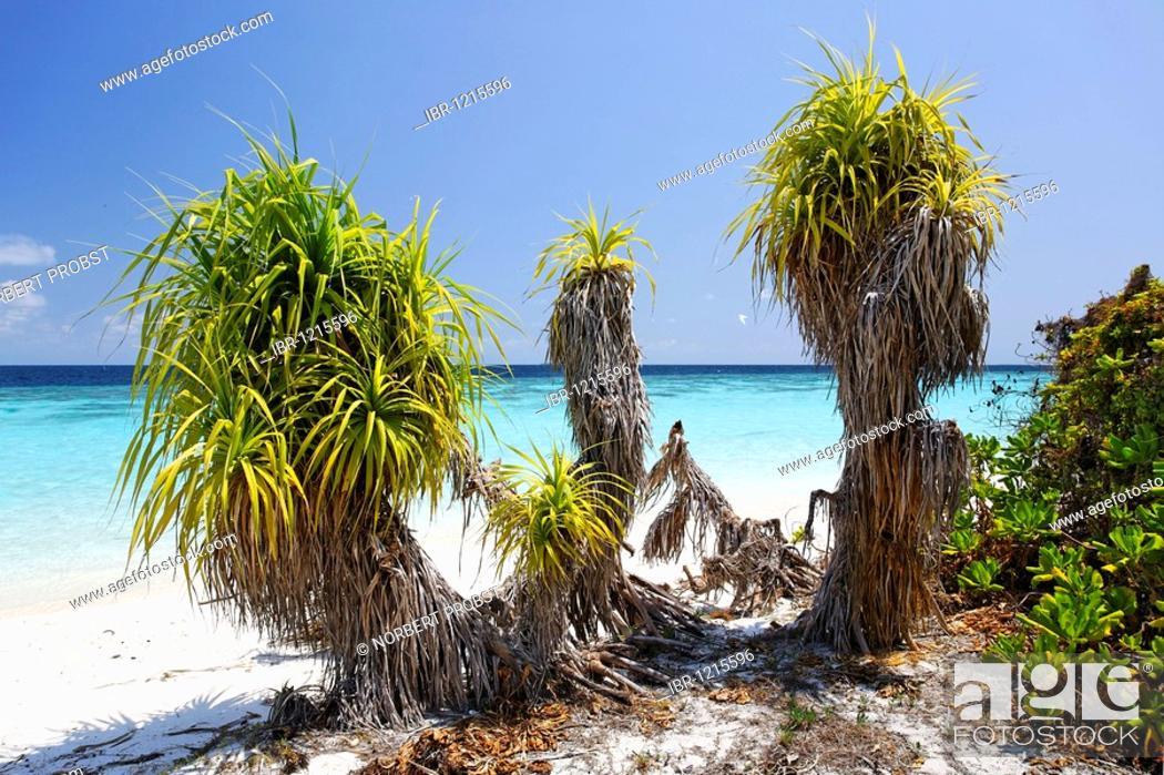 Stock Photo: Unpeopled island, Maldives island, vegetation, beach, lagoon, South Male Atoll, Maldives, archipelago, Indian Ocean, Asia.