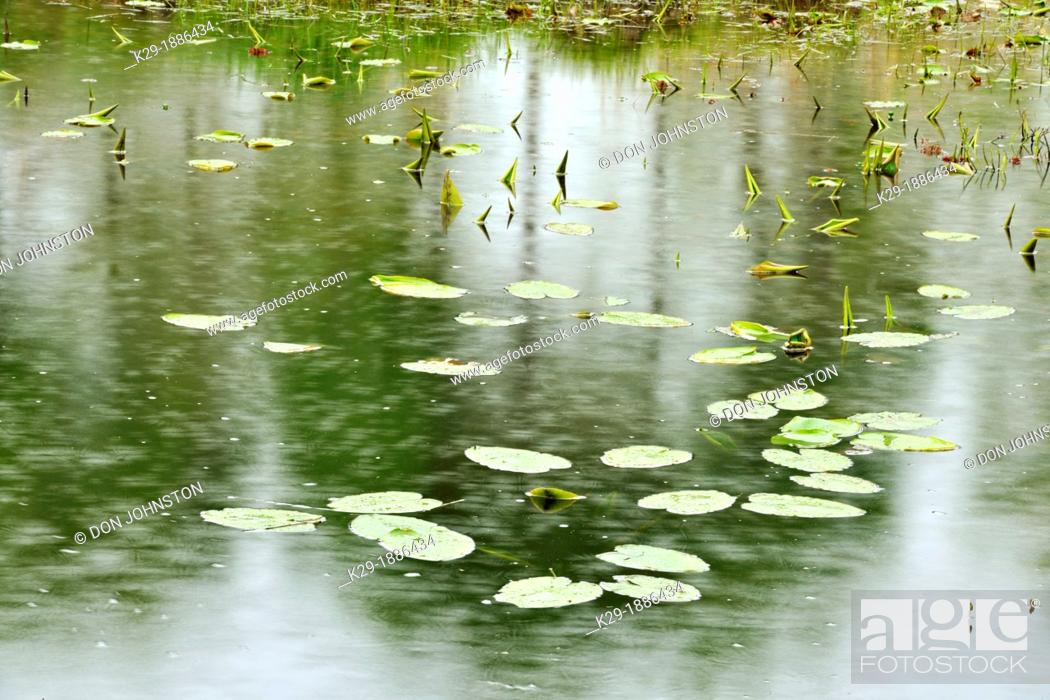 Stock Photo: Fairbank Creek with spring grasses, water lily leaves and raindrops, Greater Sudbury Whitefish, Ontario, Canada.