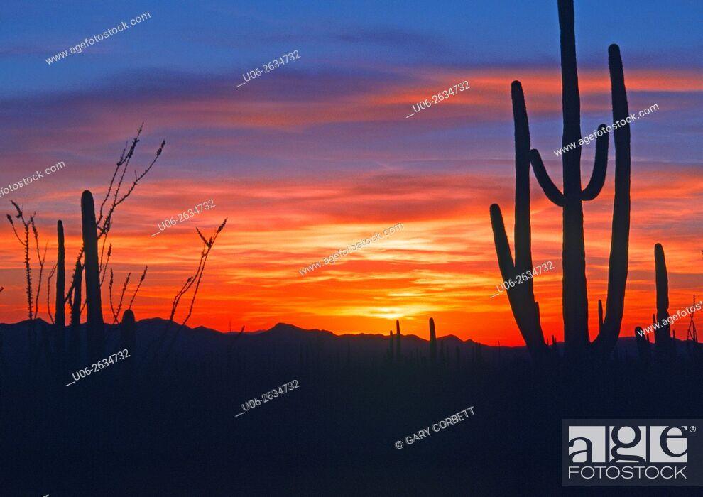 Stock Photo: Arizona sunset.