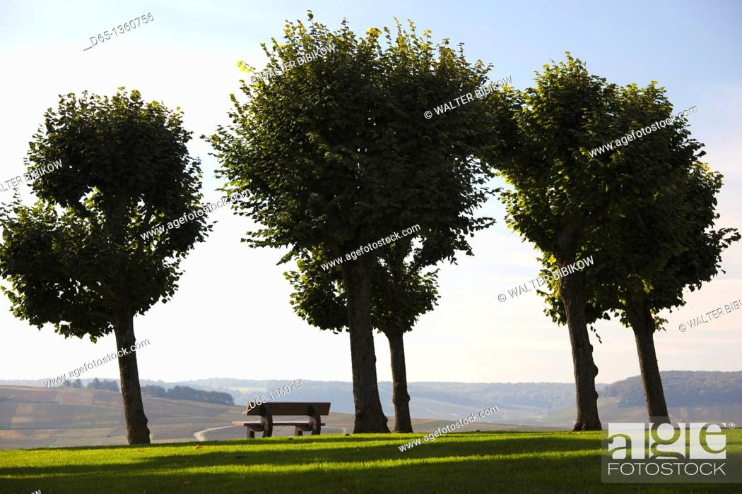 Stock Photo: France, Marne, Champagne Region, Chatillon sur Marne, town park.