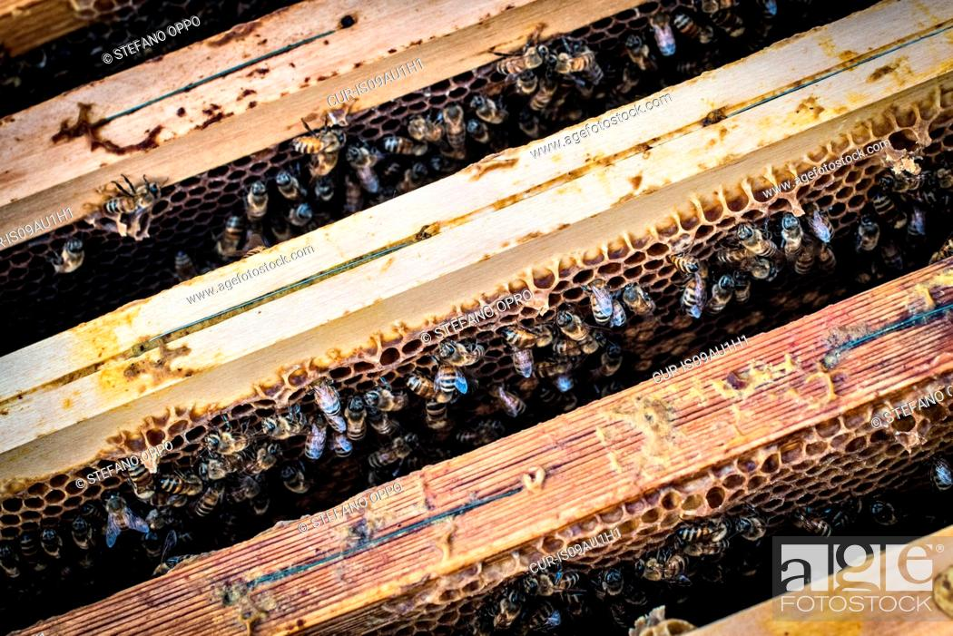 Imagen: Bees at work in hive.