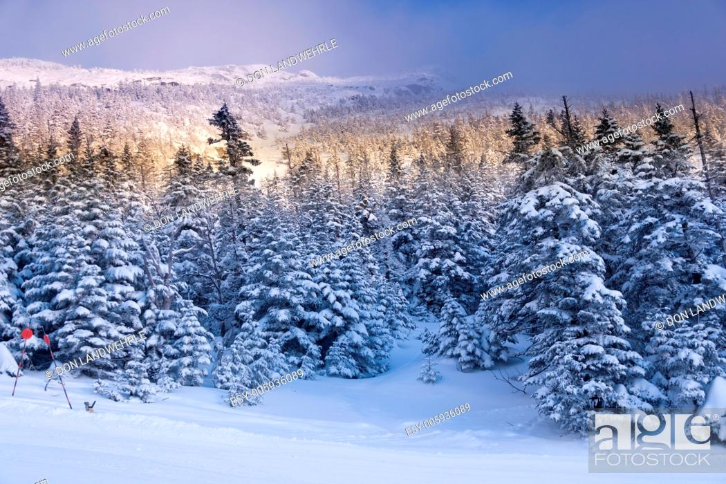 Stock Photo: Snow covered trees on Mt. Mansfield, Stowe, Vermont, USA.