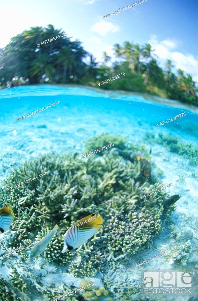 Stock Photo: Coral And Tropical Fish From Half-Underwater.