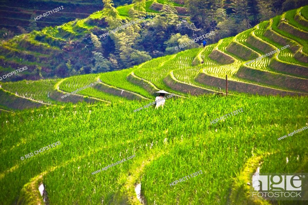 Stock Photo: High angle view of terraced fields, Jinkeng Terraced Field, Guangxi Province, China.