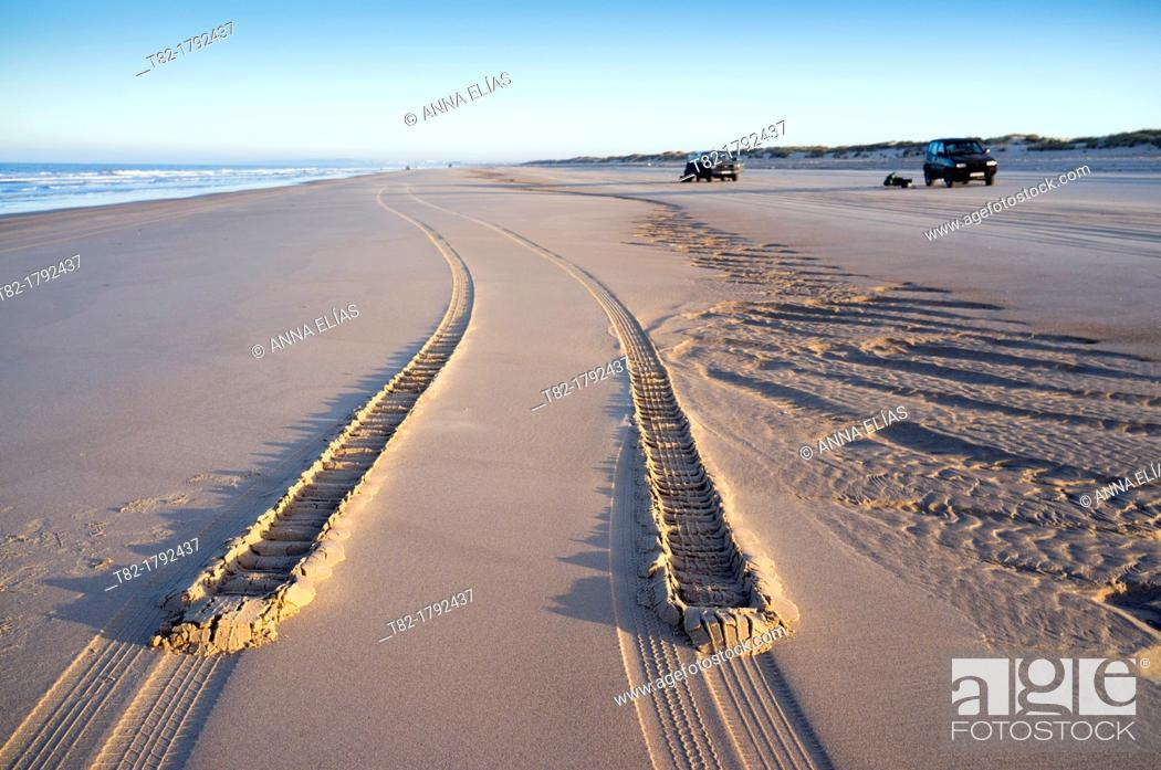 Stock Photo: Car tire tracks in the sand on the beach of the fishermen of clams at low tide. Doñana National Park, Huelva, Andalusia, Spain Europe.