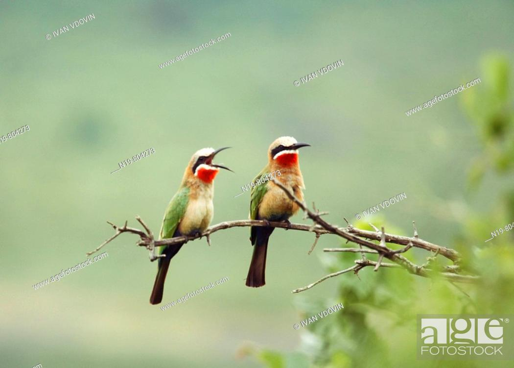 Stock Photo: Birds, Arusha National Park, Tanzania.