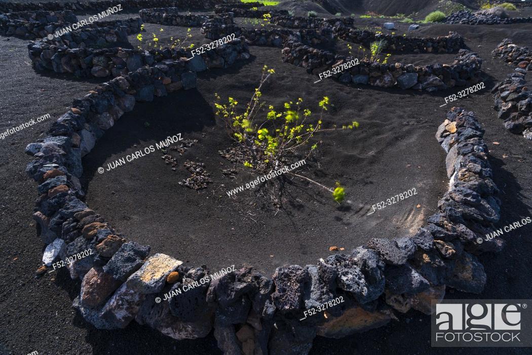 Imagen: Vineyards, Rural landscape, Volcanic landscape, La Geria, Lanzarote Island, Unesco Biosphere Reserve, Canary Islands, Spain, Europe.