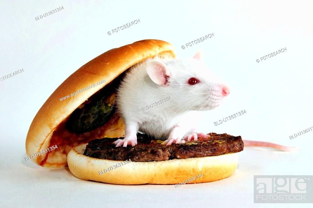 Stock Photo: angebraten, bread roll, barbecue, animals, alfred.