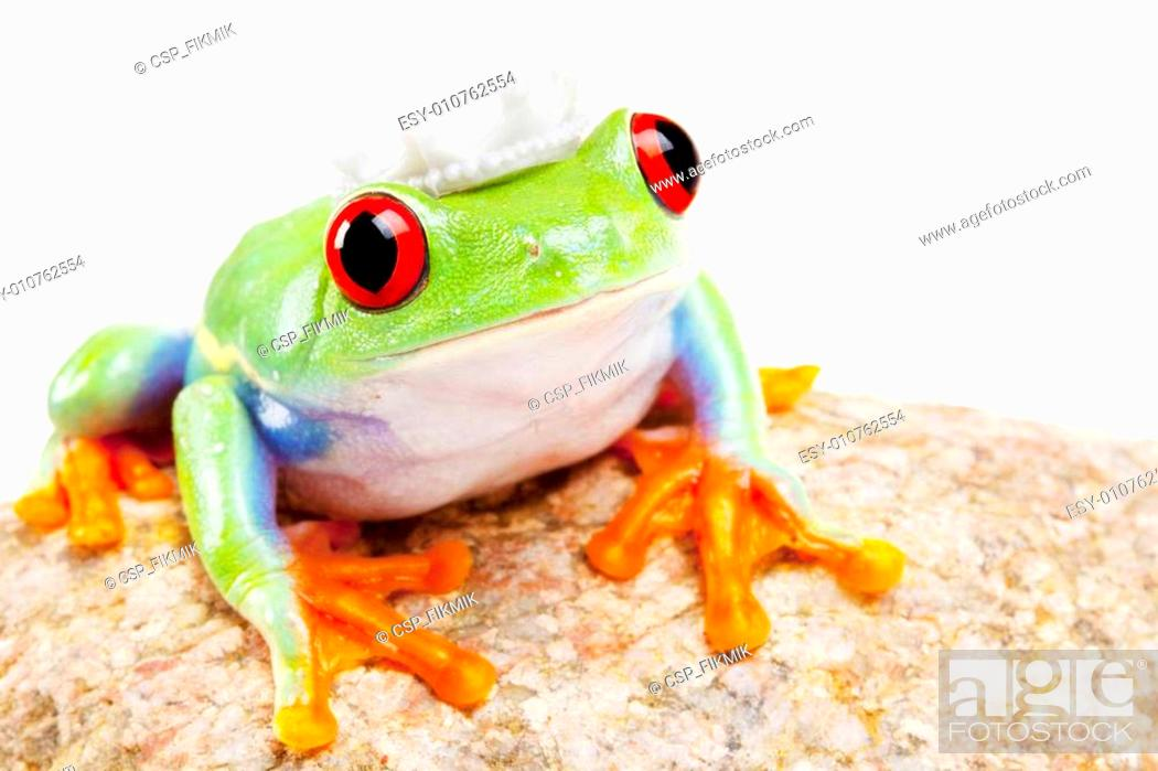 Stock Photo: Green frog closeup!.