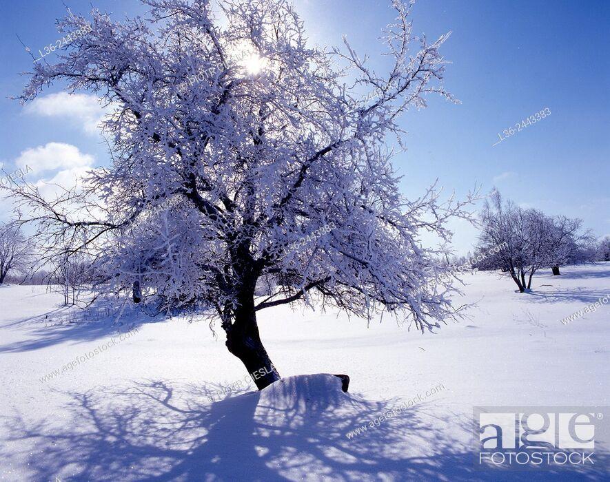 Stock Photo: Winter, Suwalski region, North-eastern Poland.