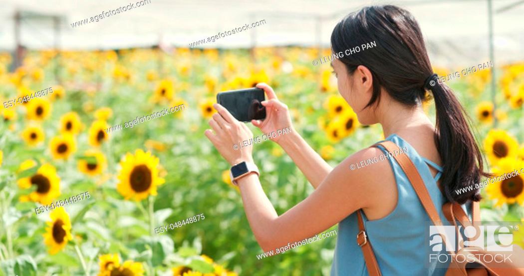 Stock Photo: Woman taking photo on sunflower field.