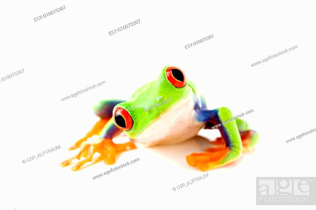 Stock Photo: frog is curious.