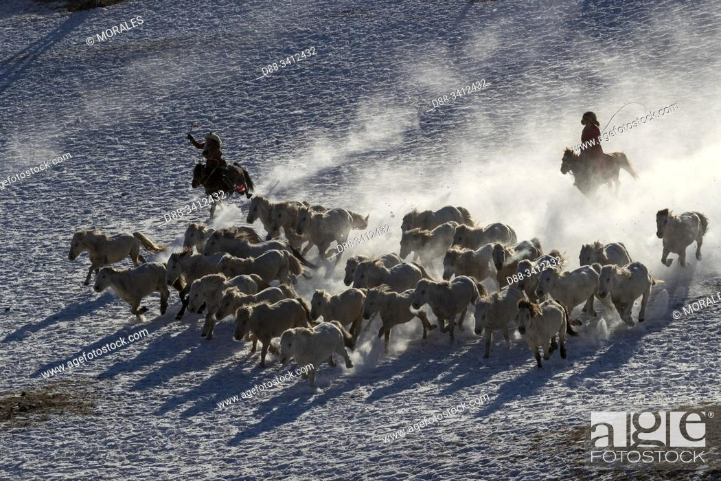 Stock Photo: China, Inner Mongolia, Hebei Province, Zhangjiakou, Bashang Grassland, Mongolian horsemen lead a troop of horses running in a meadow covered by snow.