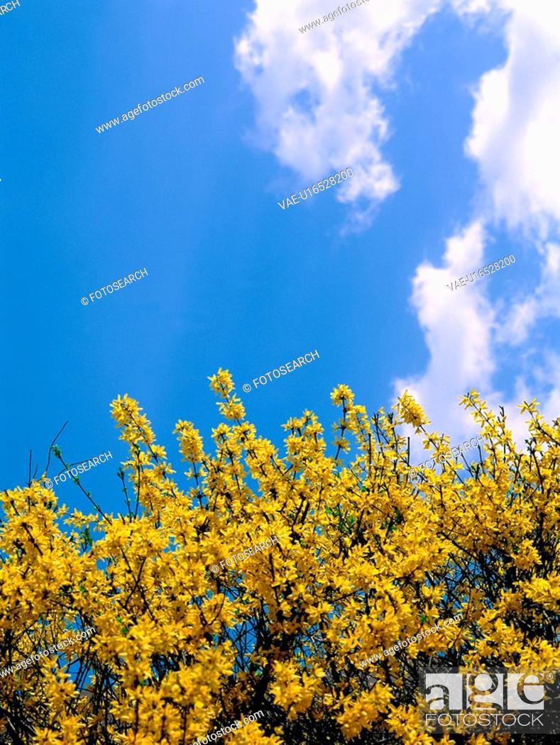 Stock Photo: flower, sky, plant, nature, cloud, film.