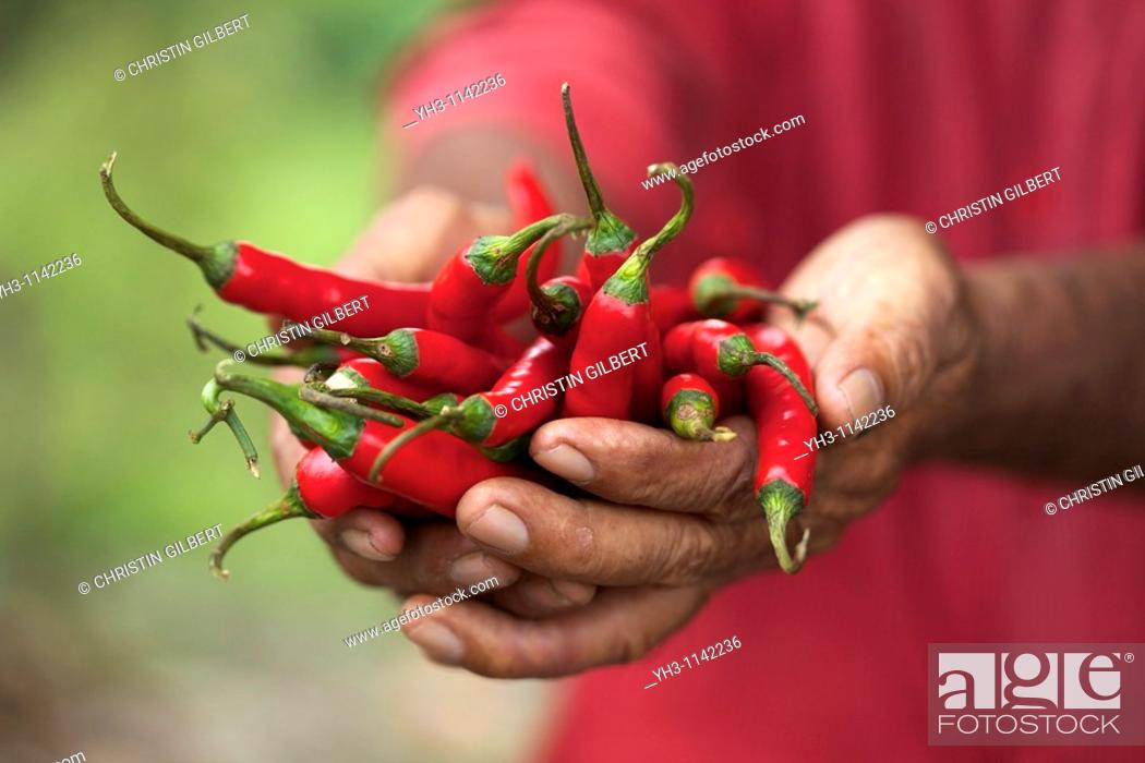 Stock Photo: Farmer hand holding red hot chili peppers.