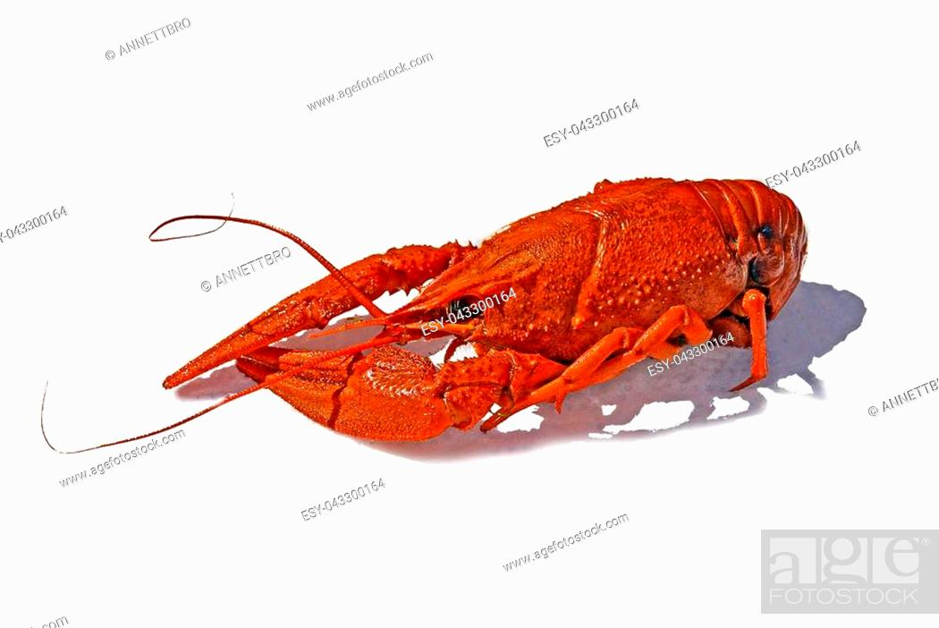 Imagen: Fresh boiled red crayfish on white background. traditional russian food, beer snack.