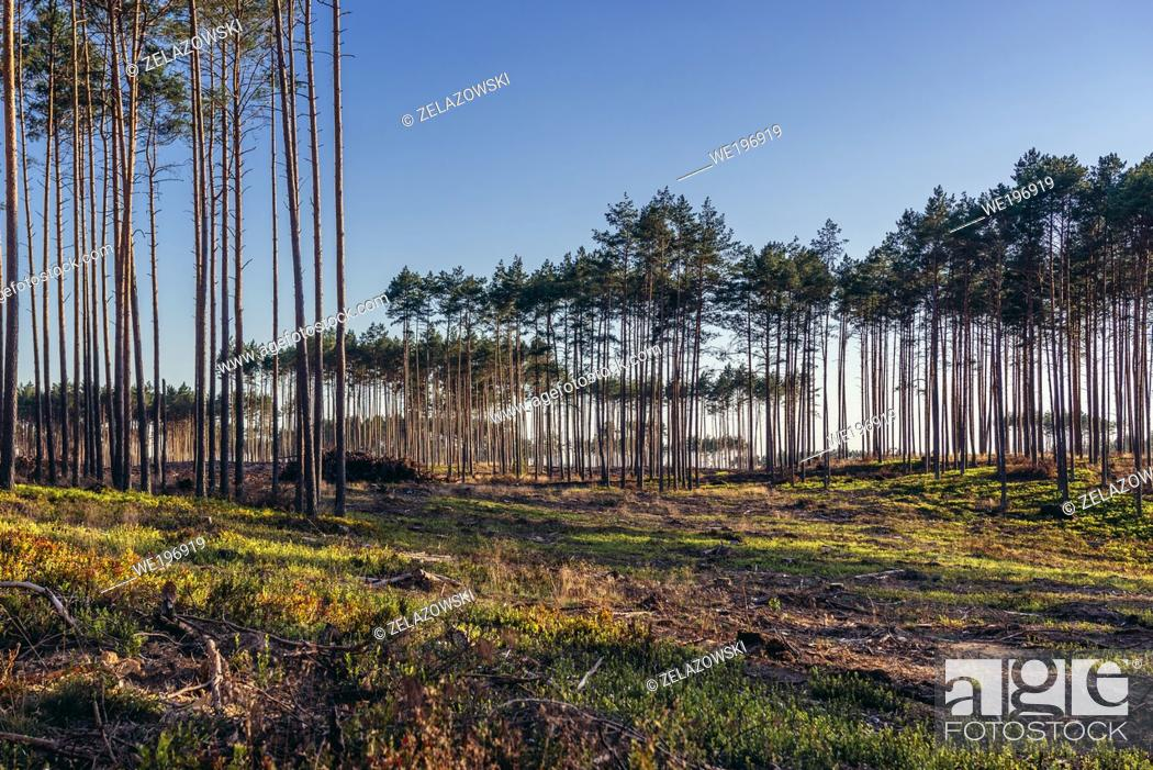 Stock Photo: Destroyed forest near Rytel village, after severe storms that passed in August 2017 over Poland and killed 5 people.
