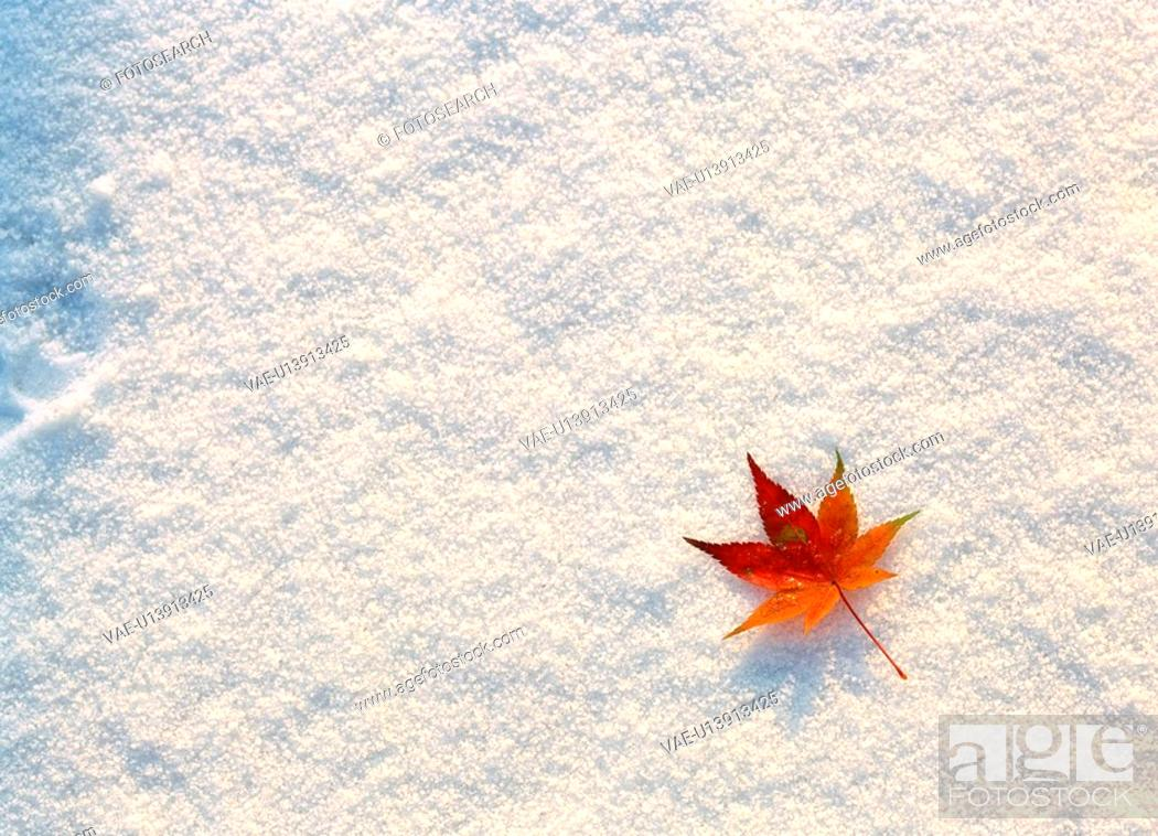 Stock Photo: leaves, background, snow, scenery, nature, film.
