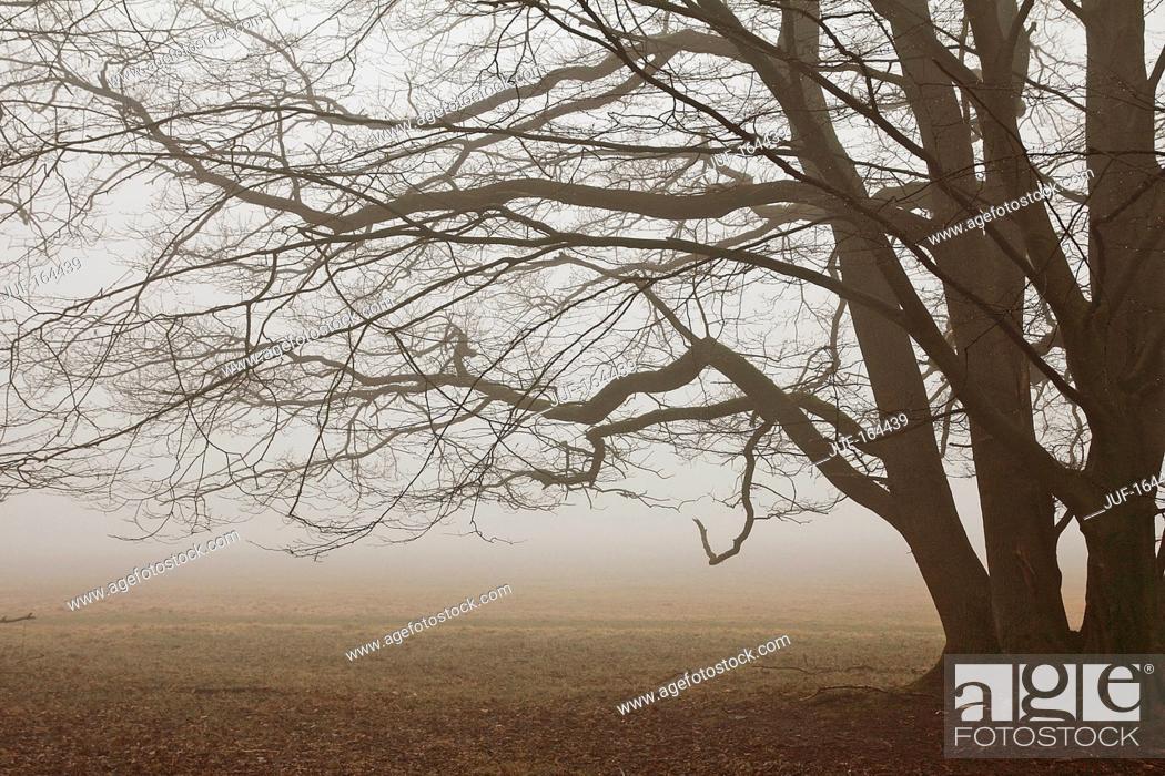 Imagen: Beech - fog.