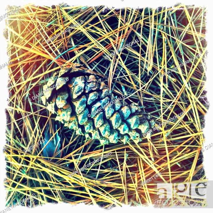 Stock Photo: A pine cone and pine needles.