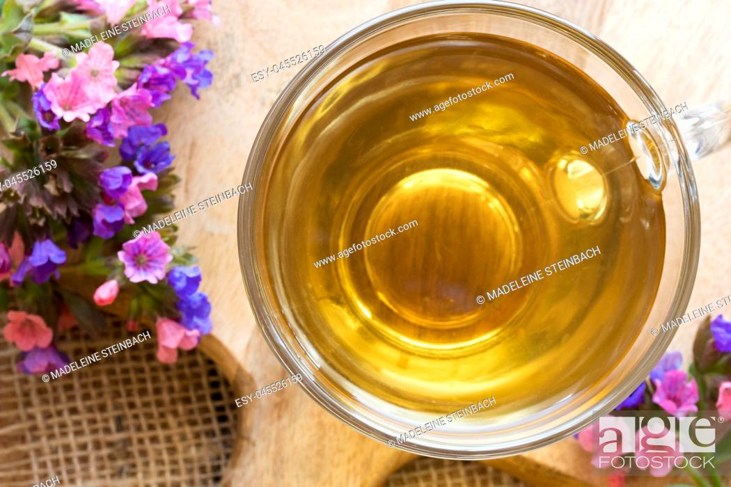 Stock Photo: A glass cup of lungwort (pulmonaria) tea with fresh lungwort flowers.