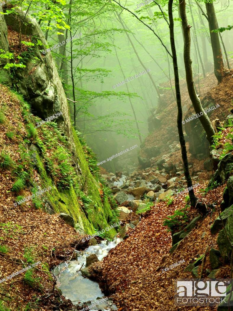 Stock Photo: Sot de l'Obi stream. Montseny Natural Park. Barcelona province, Catalonia, Spain.