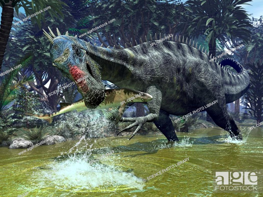 Stock Photo: Suchomimus dinosaur. Artwork of a Suchomimus dinosaur catching a shark. This dinosaur lived 112 million years ago in what is now the Sahara region of Africa.