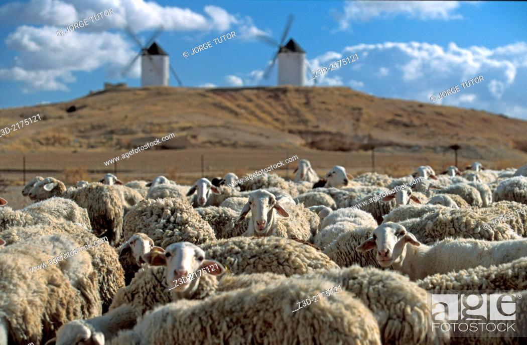 Stock Photo: Flock of sheep in a Castilian landscape with two windmills, Castilla-La Mancha, Spain.