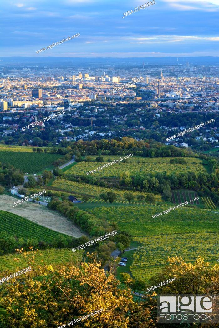 Vienna View From Mountain Kahlenberg To Vienna Danube Vineyards