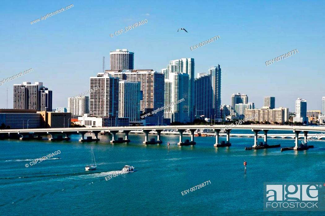 Stock Photo: Gull Flying Over Biscayne Bay.